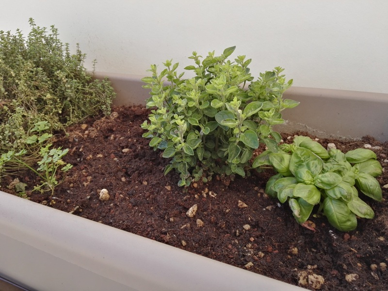 terrazzo-piante-aromatiche